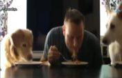 Ит пен адам спагетти жеп жарысты (видео)