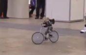 Велосипед айдайтын робот (видео)