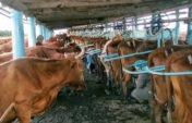 В Акмолинской области открылось два сельхозкооператива