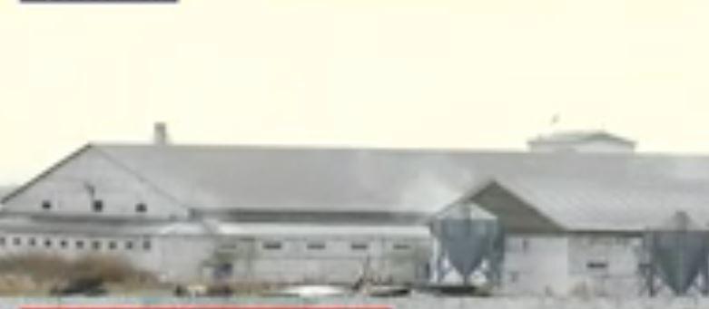 Тұрғындардың талабынан кейін шошқа фермасы уақытша жабылды (видео)