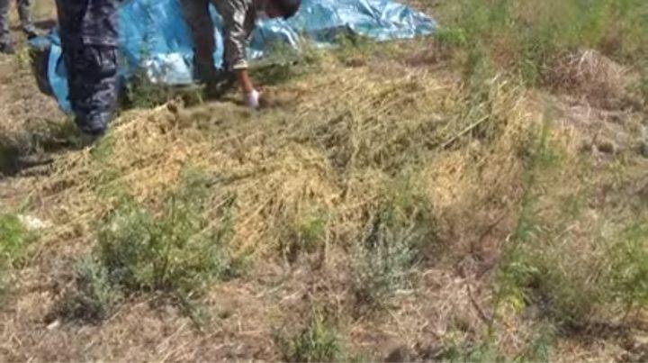 Шу тұрғынынан жарты тоннадан астам есірткі тәркіленді (Видео)